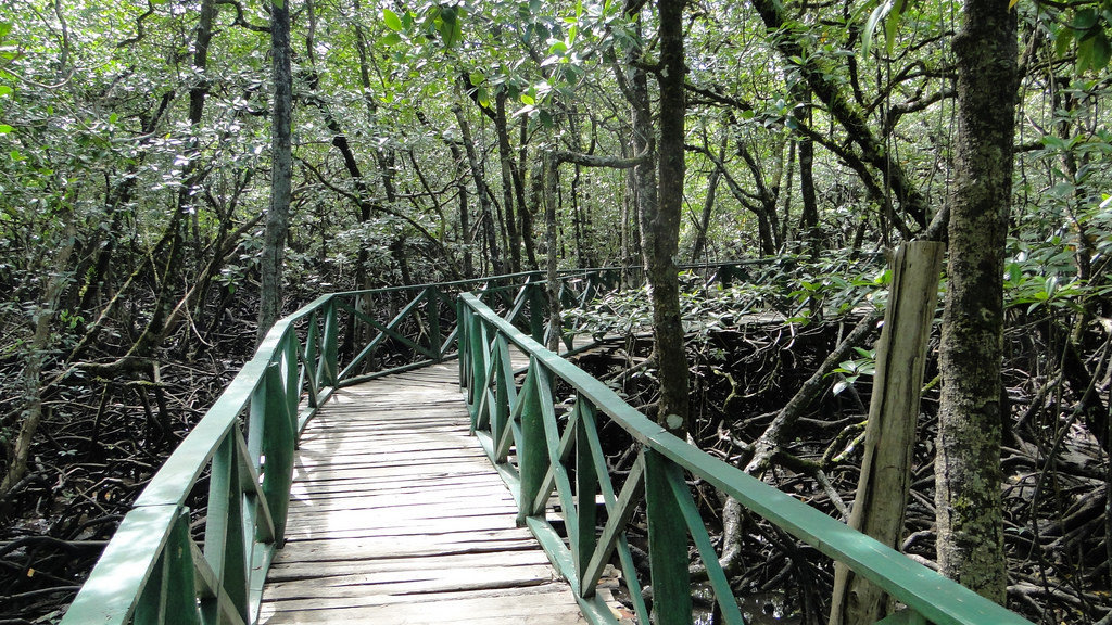 Andaman Baratang - Walking bridge through mangrove forest