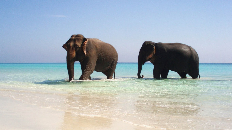 Andaman Havelock Beach