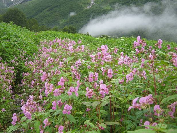 Valley of Flowers, Auli