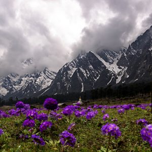 Valley of Flowers, Yumthang