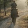 Vanghat Woods, Elephant Ride