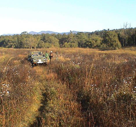 Vanghat Woods, Jeep Safari