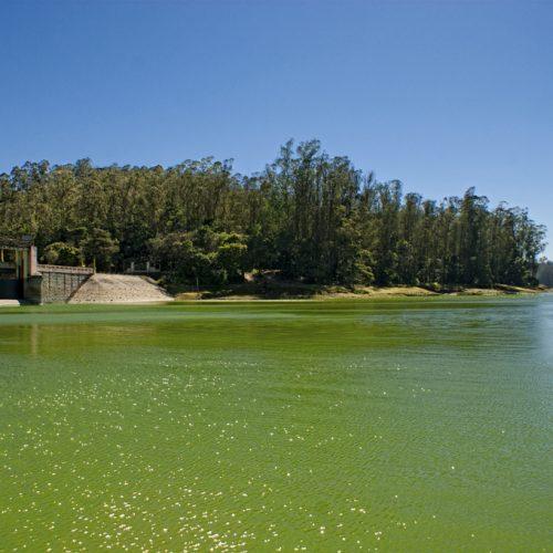 Lake, Ooty