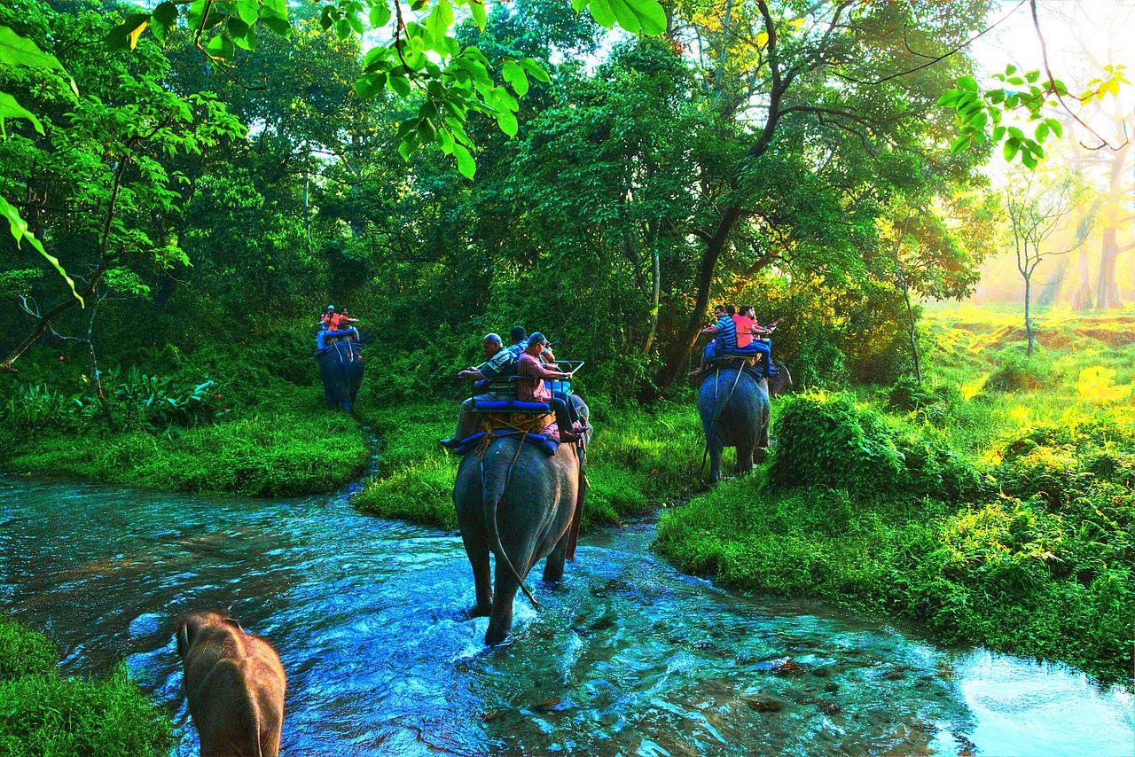 Elephant_Safari_at_Jaldapara_2
